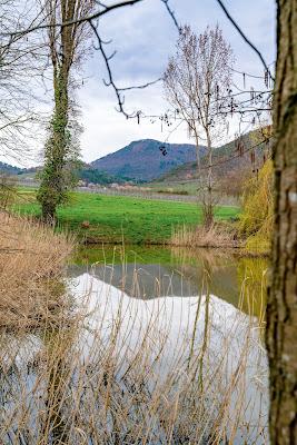 Pfälzer Mandelpfad | Etappe 05 Edenkoben – Birkweiler | Wandern Südliche Weinstraße | Mandelblüte Pfalz 13