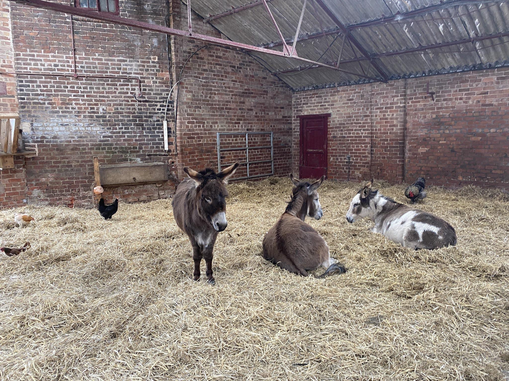 donkeys on the farm