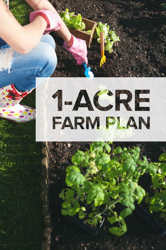 G 4 Gardening: One Acre Homestead