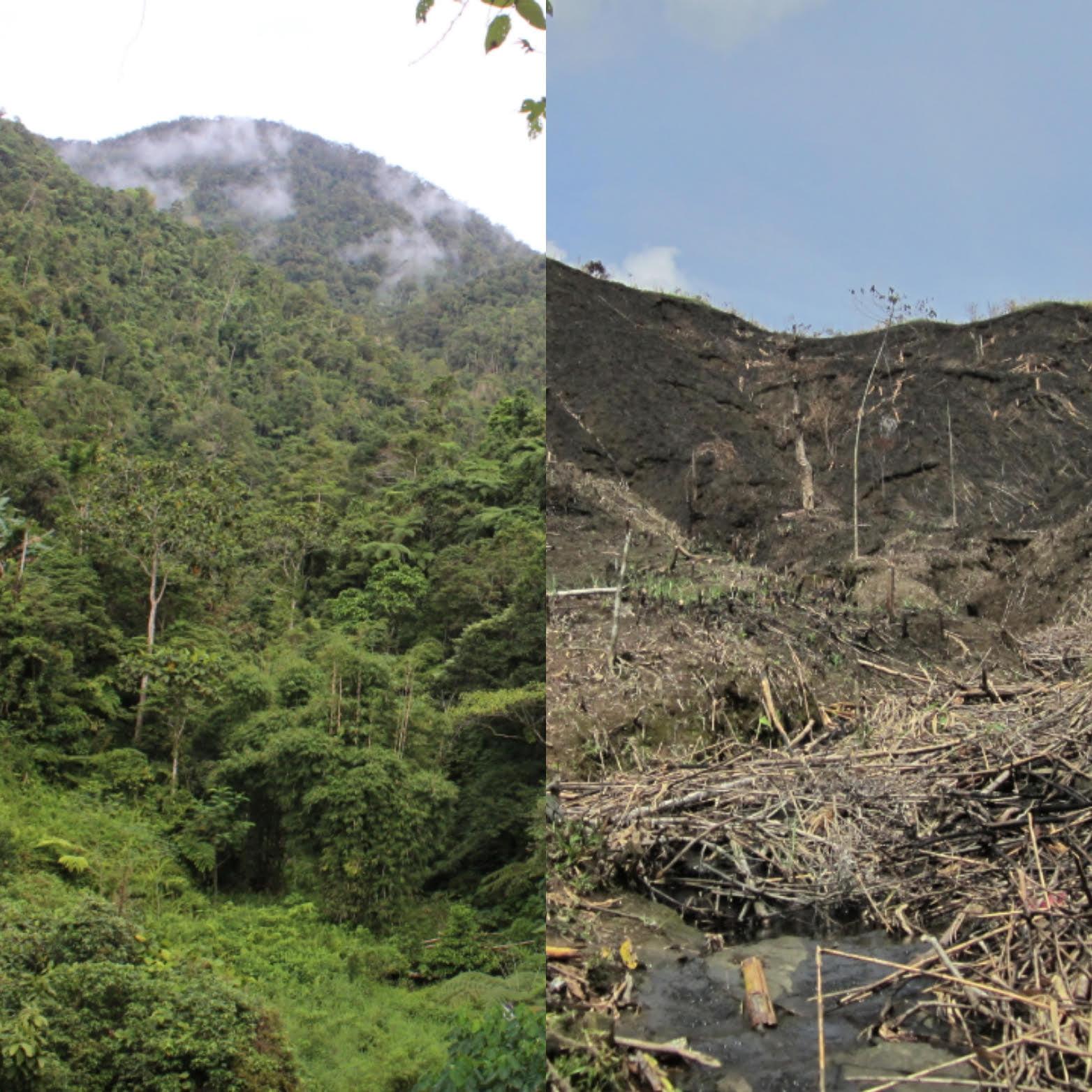 Aggressive slash and burn farming (Kaingin)