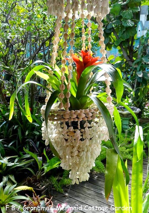 Hanging Planter with Bromeliads