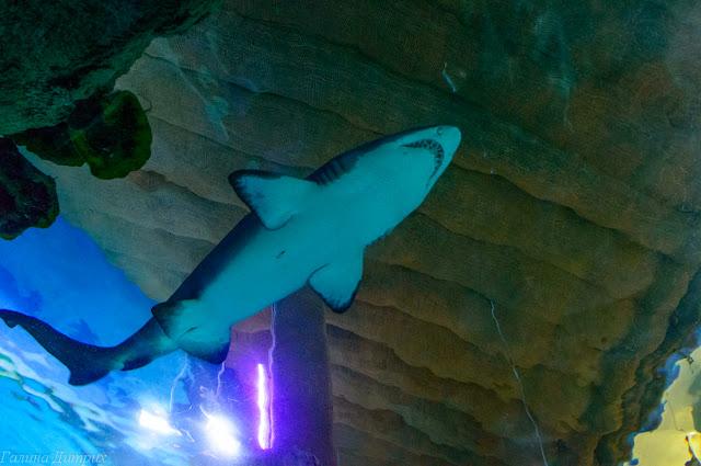 Москвариум акулы фото