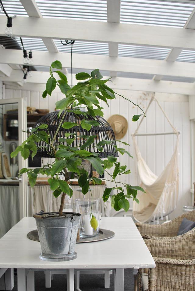 hannashantverk altan uterum citronträd hängstol