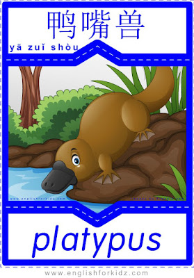 Platypus - English-Chinese flashcards for wild animals topic