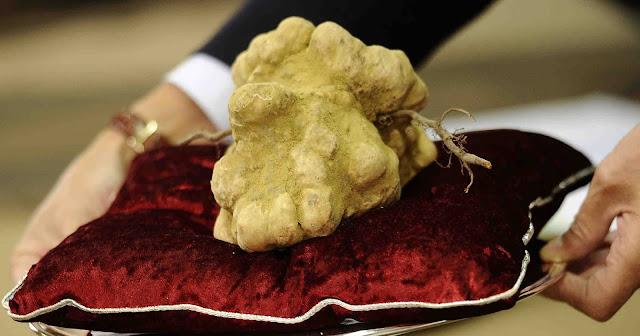 jamur truffles putih