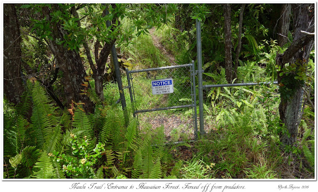 Naulu Trail: Entrance to Hawaiian Forest. Fenced off from predators.
