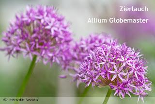 Blumenzwiebel für Blumenbeete, Staudenbeete, Rabatten planen