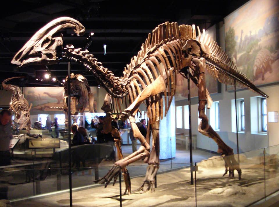 الهادروصورات