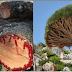 Les 8 phénomènes naturels les plus beaux et les plus étranges