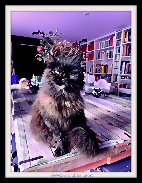 Pandora's Purrfect Selfie   ©BionicBasil® Caturday Art Hop