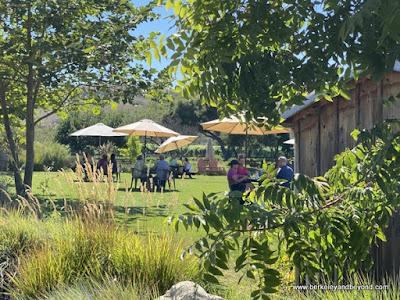 tasting garden at check-in desk at Stolo Family Vineyards in Cambria, California