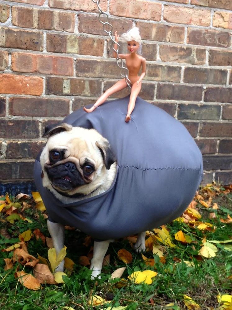 Wrecking Pug Tottie Rocks Homemade Halloween Costume & Half-Past Kissinu0027 Time: Wrecking Pug Tottie Rocks Homemade Halloween ...