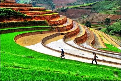 นาขั้นบันไดเมืองซาปา (Sapa Rice Terraces)