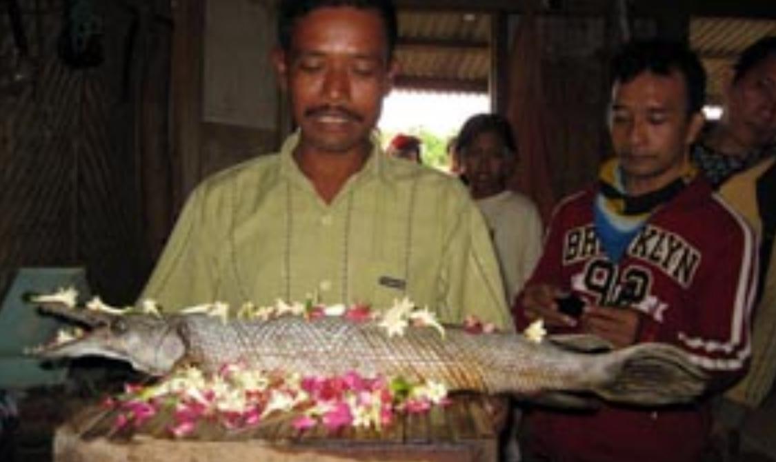 Ikan Kepala Buaya Hebohkan Warga