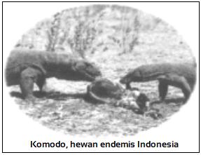 Contoh Region fauna Indonesia tengah