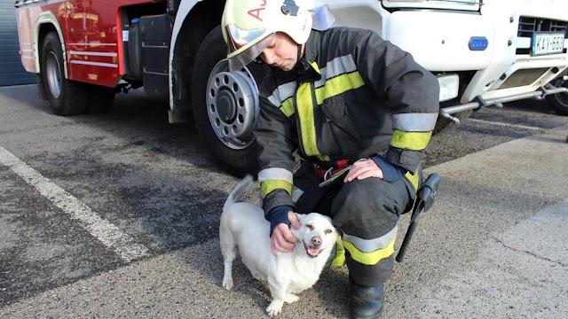Aggódva várja, míg vissza nem térnek a feladatból – Az állomás kutyája dobja fel az ajkai tűzoltók mindennapjait