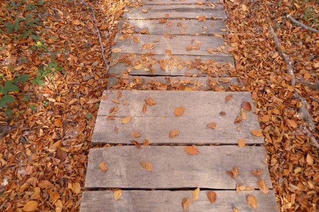 Podróżnicze pomysły na jesień
