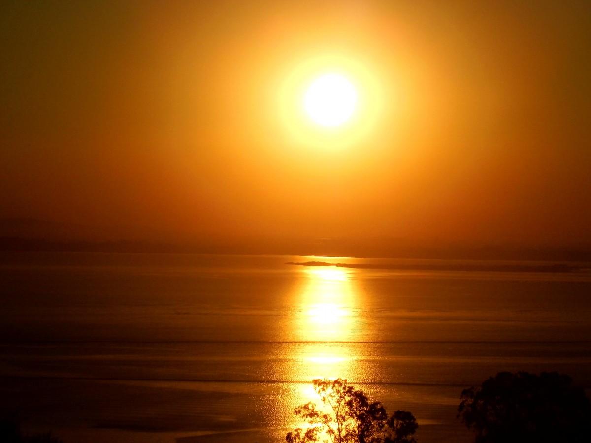 Efek Cahaya Matahari Bagi Hewan