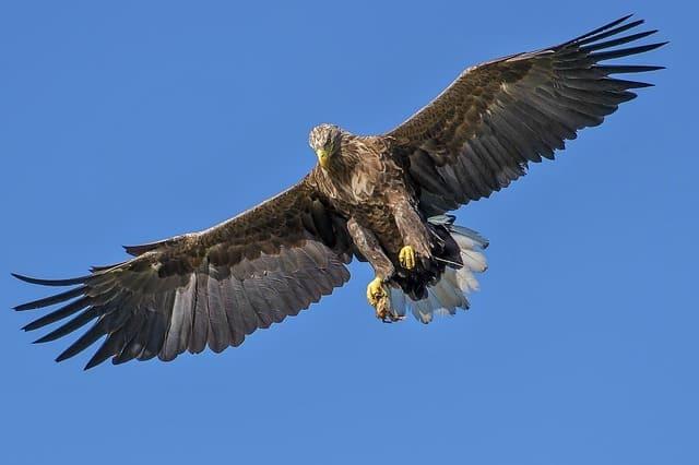 kepakan sayap elang