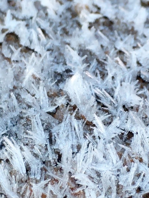 ice crystals on log