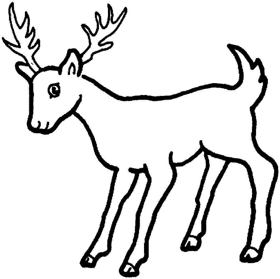 coloring pages and deer - photo#30