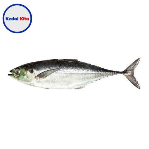 Ikan Caru 500 Gram
