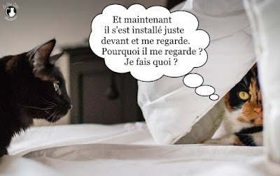 Beau regards de chats.