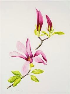 acuarela-pinturas-botanicas-flores