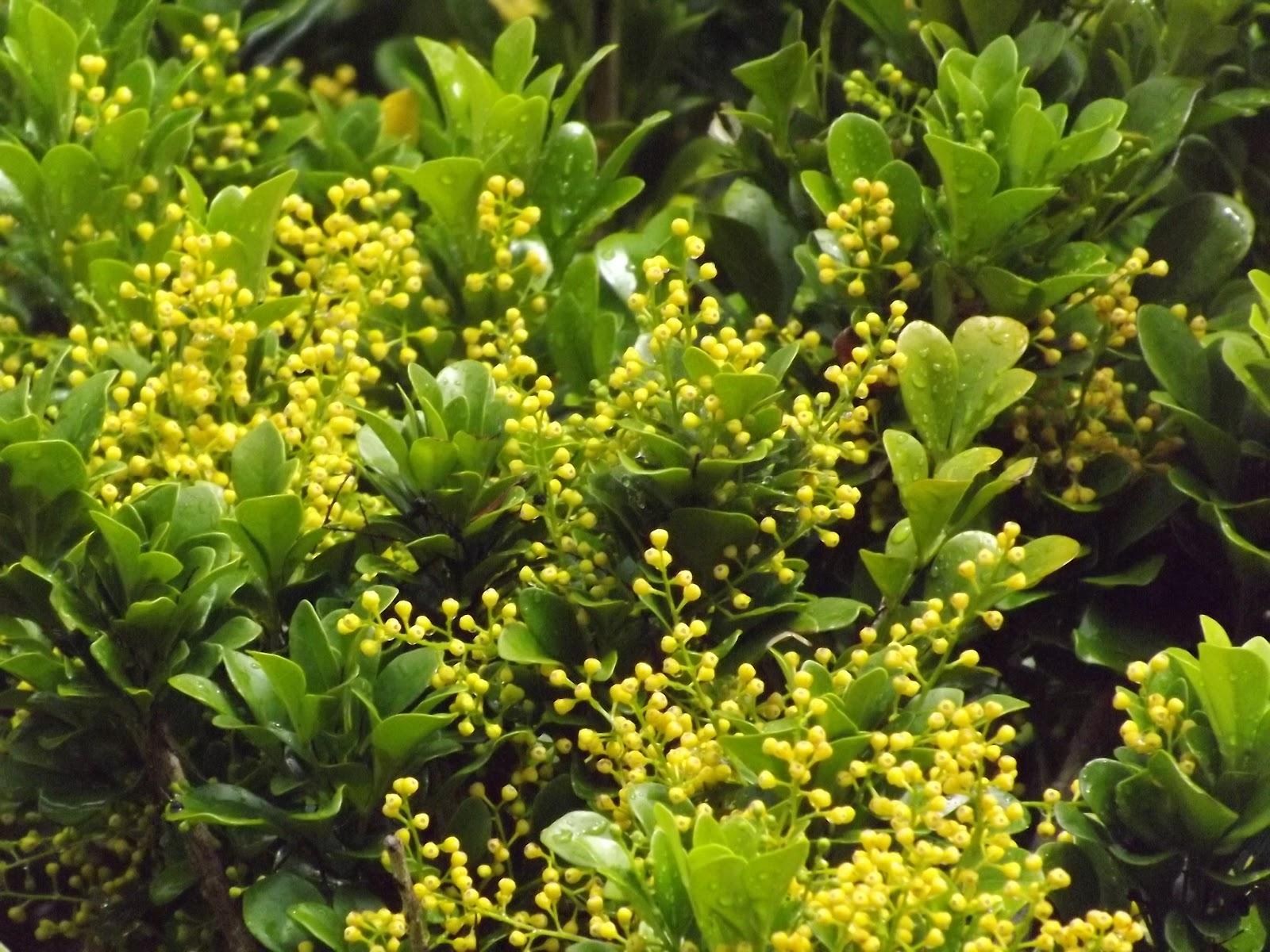 Anya's Garden Perfumes: Ask the Perfumer Sunday May 6, 2012