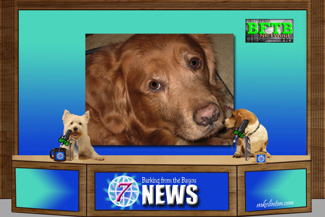 BFTB NETWoof News of Golden Retriever rescue