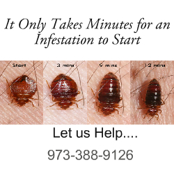 Affordable Bed Bug Removal NJ Call (973) 388 9126