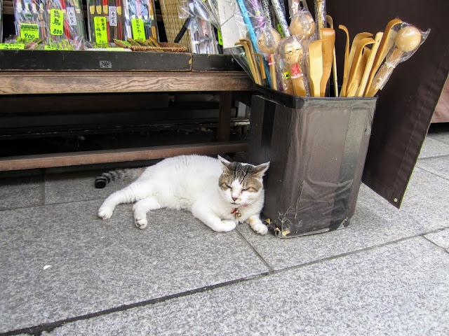 gattosandro viaggiatore