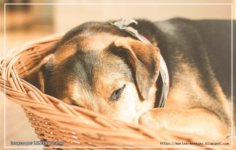 A imagem mostra um cachorro preto e laranja dormindo em um cesto de palha