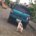 Vídeo; Cachorro é arrastado por veículo em ruas de Ijuí