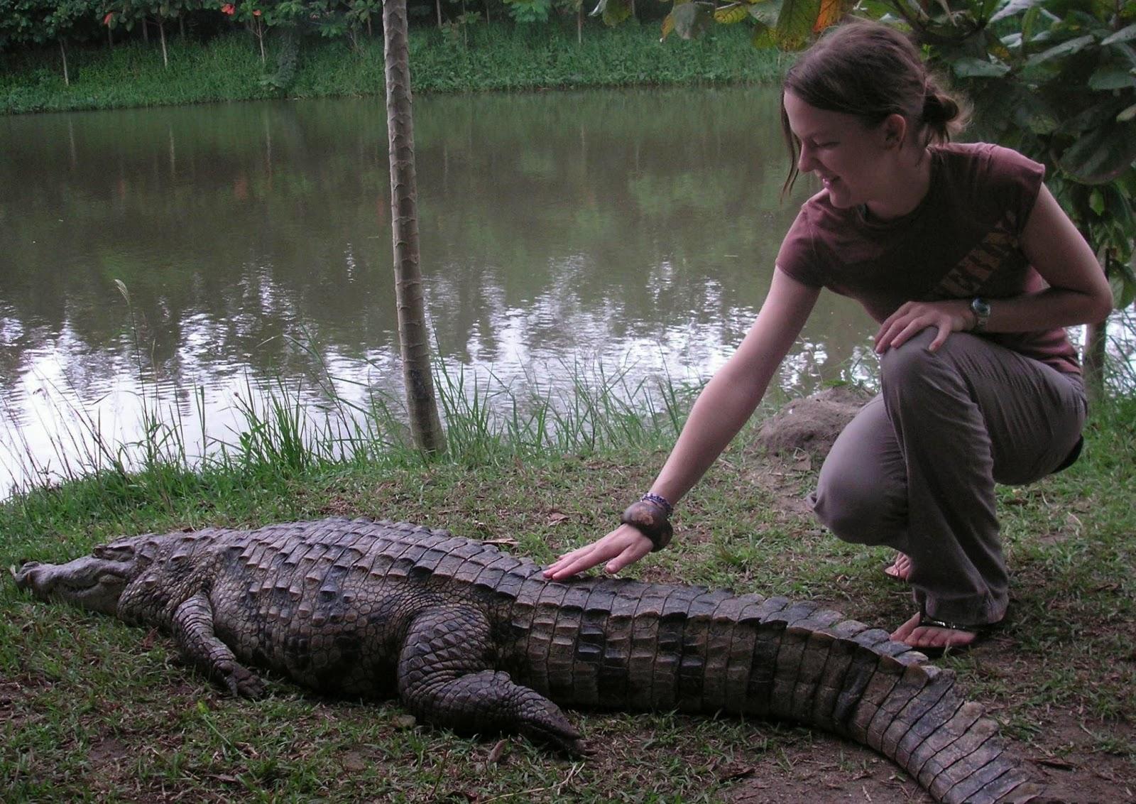 leben krokodile in der savanne