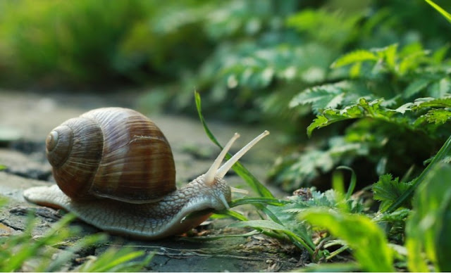 How-to-get-rid-of-snails-in-the-garden