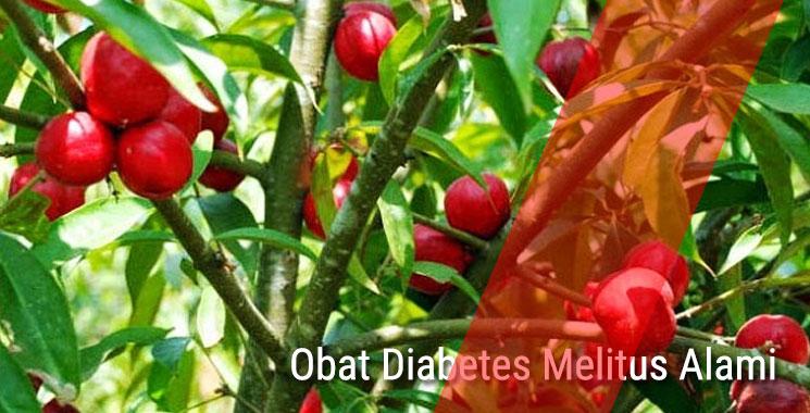 Obat Diabetes Melitus Alami Dari Tumbuhan