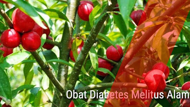 mengkudu sebagai obat diabetes alami