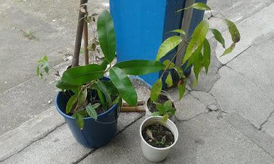 Equipe do Programa Escola da Família da Escola Yolanda realiza plantio de mudas de árvores