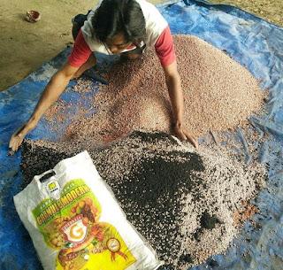 Cara Mencampur pupuk organik untuk sawit