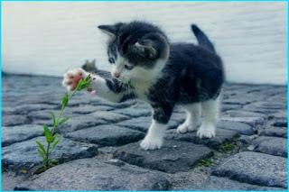 100 Nama Nama Kucing Lucu Jantan
