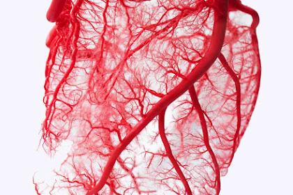 3 Alasan Mengapa Darah Berwarna Merah