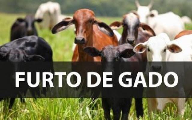 Furto de Gado em Nova Tebas Paraná