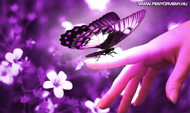 Szimbólumok/Állatszimbólumok: Pillangó (lepke)