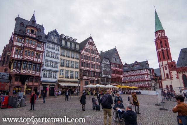 die neue Altstadt in Frankfurt - Blog Topfgartenwelt