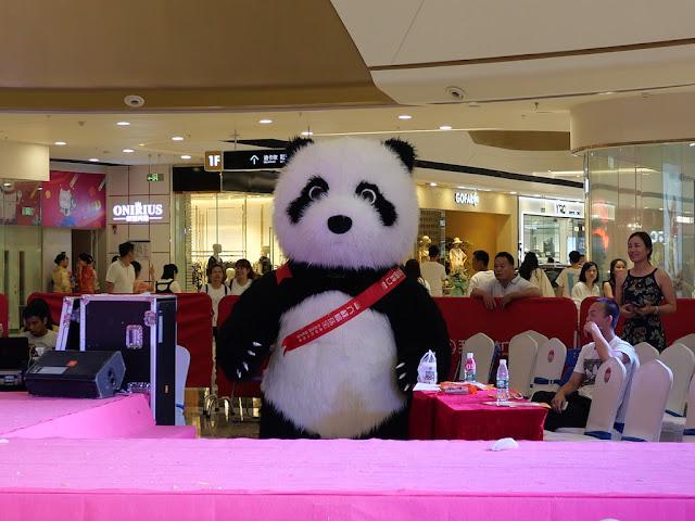 Panda staring at me