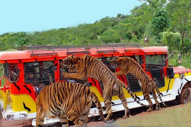 Zoobic Safari in Subic