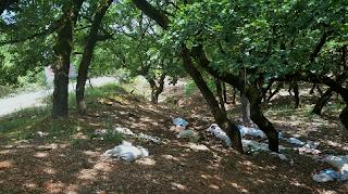 Ηλεία: Περιβαλλοντικό έγκλημα στην Κάπελη!