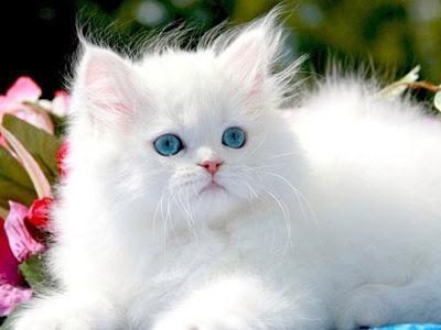 صور صور قطط كيوت 2020 خلفيات قطط جميلة جدا 4022.jpg