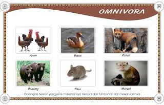Penggolongan Hewan Berdasarkan Jenis Makanannya
